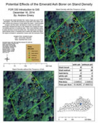 Potential Effects of the Emerald Ash Borer on Stand Density, by Andrew Emery